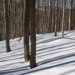 Zimowe pejzaże z drogi na Przegibek