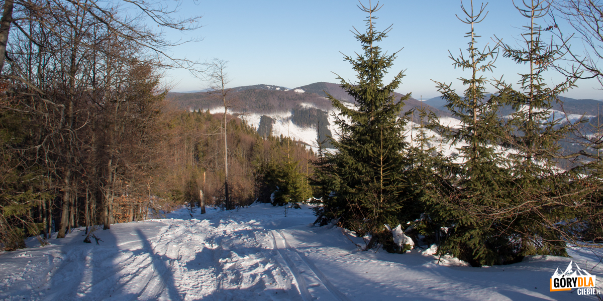 Czerwony szlak pod szczytem Jaworzyny (1173 m)