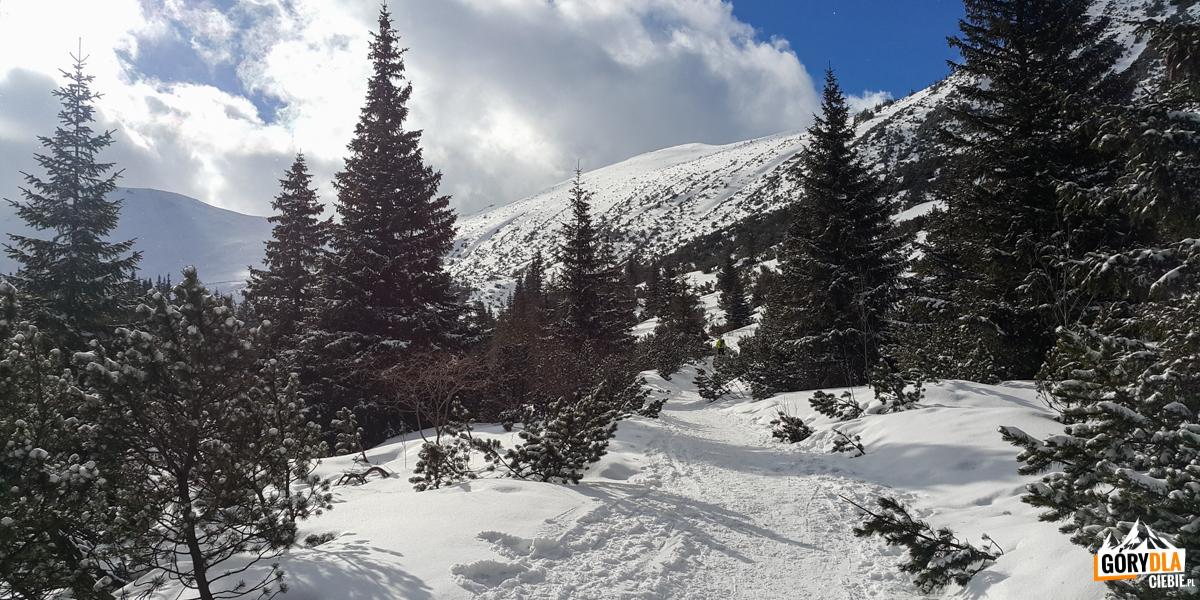 Dolina Gąsienicowa przy Murowańcu - zdj. M.J.P.