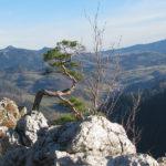 Widok ze szczytu Sokolicy (747 m) w kierunku na Małe Pieniny i najwyższy szczyt Pienin - Wysoką (1050 m)