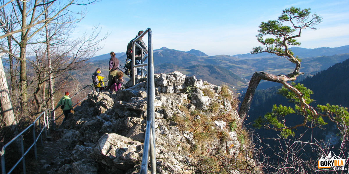 Ubezpieczony szczyt Sokolicy (747 m) i słynna sosna reliktowa