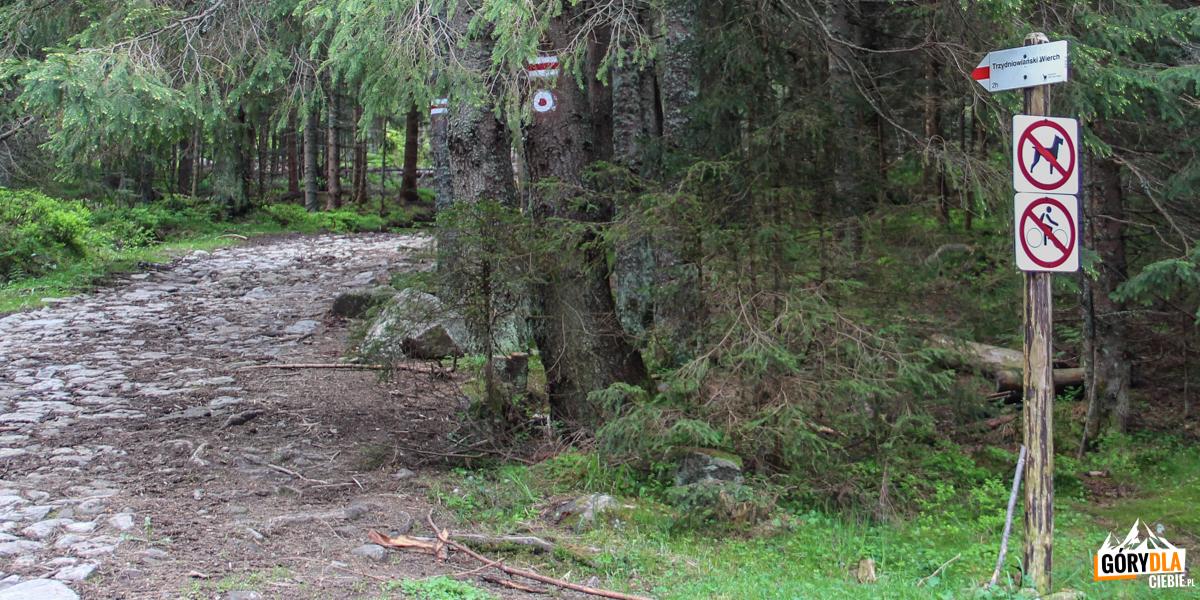 Dolina Chochołowska - początekczerwonego szlaku na Trzydniowiański Wierch (1758 m)