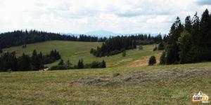 Widokowy zjazd do Klikuszowej (w tle Babia Góra)