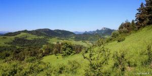 Widok spod szczytu Wysokiego Wierchu (898 m) w kierunku Trzech Koron (982 m)