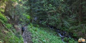 Trasa zielonego szlaku na Babią Górę, w dole potok Krzywa Rzeka