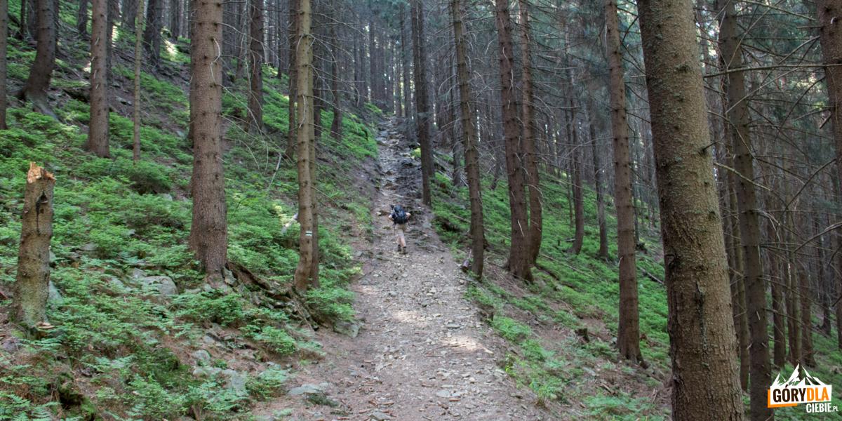 Trasa zielonego szlaku naBabią Górę