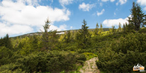Widok na południowe zbocza Babiej Góry