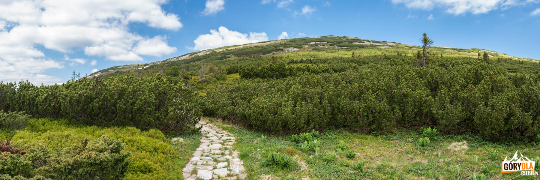 Widok napołudniowe zbocza Babiej Góry