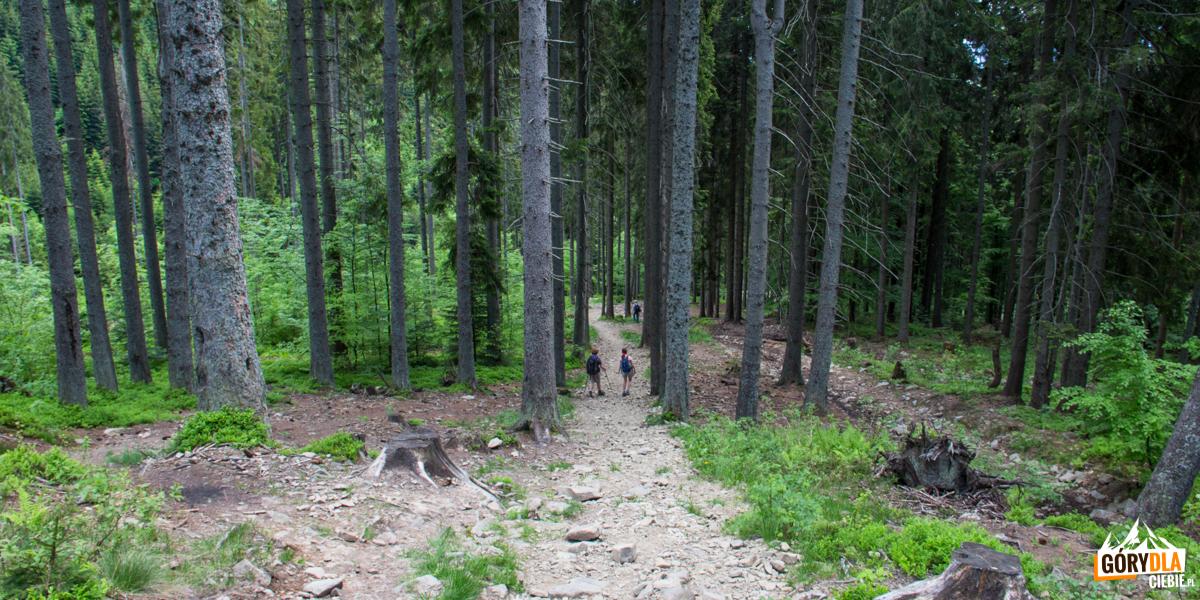 Przejscie przez las - żółty szlak dochodzi dopotoku Bystra