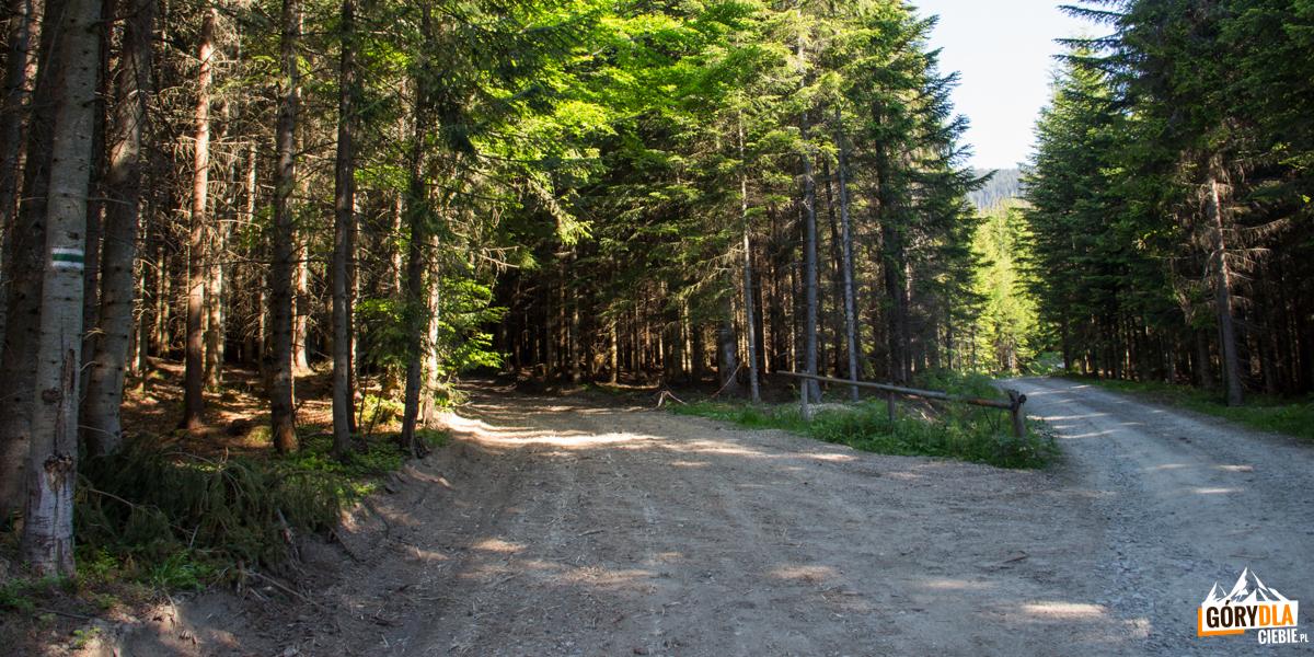 Początek szlaku zielonego naBabią Górę