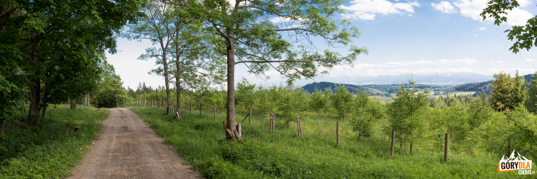 Droga z Czyżów Wierszek do Stańcowej
