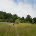 Kolorowa łąka nad wsią Biłasowica po drodze na Pikuj