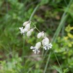 Piękne białe kwiaty (nie wiemy jakie) przy drodze na szczytem Pikuja