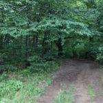 Zielony szlak - zejście z Pikuja do Biłasowicy