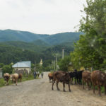 Zjazd do wsi Roztoka