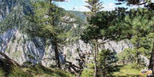 Sosenki rosnące na wysokich wapiennych ścianach w dolinie Große Höllental