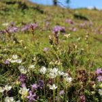 Alpejski letni ogród