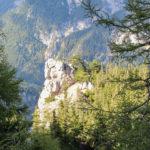 Sosenki porastające wapienne skały – widok przy zejściu żółtym szlakiem do wsi Kaisserbrunn