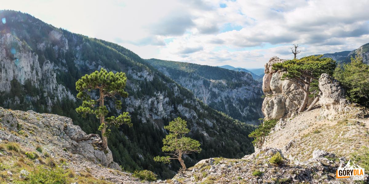 Sosenki porastające wapienne kały – widok przy zejściu żółtym szlakiem do wsi Kaisserbrunn