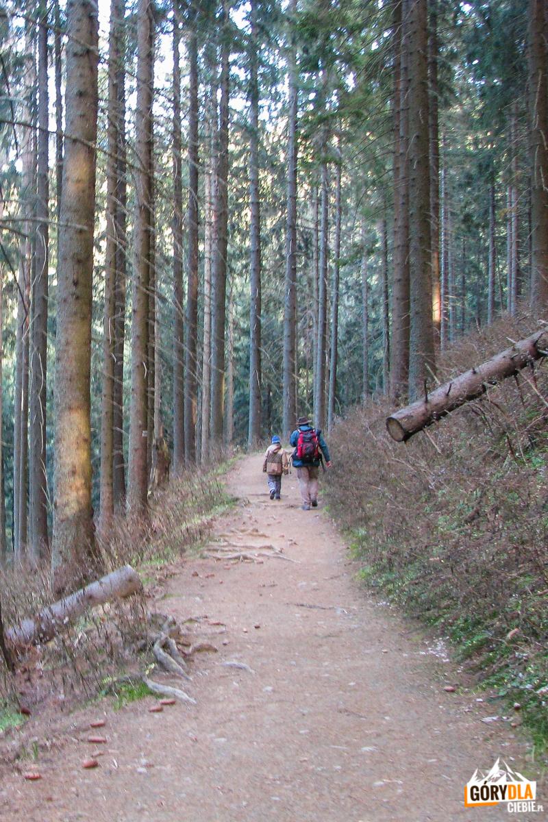 Zejście z Nosalowej Przełęczy (1103 m) do Kuźnic