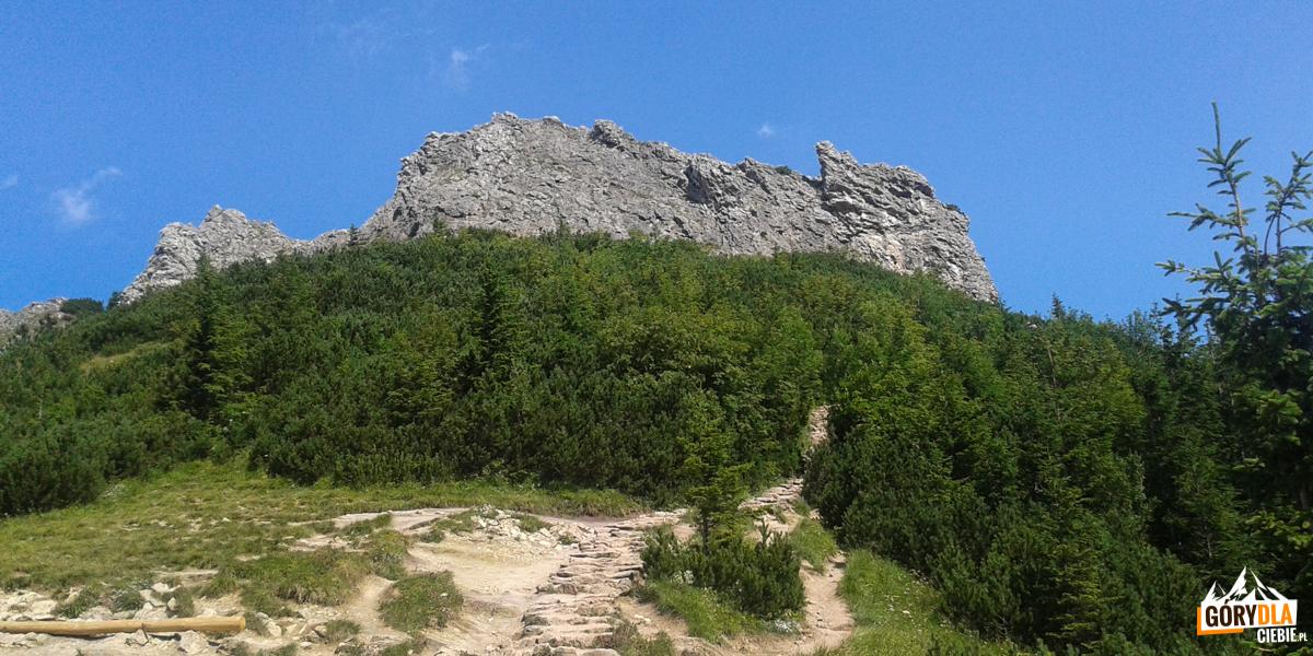 Szczyt Sarniej Skały (1377 m) od strony Czerwonej Przełęczy