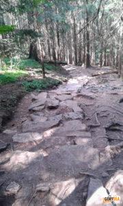 Droga z Doliny Strążyskiej na Czerwoną Przełęcz (1303 m)