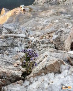 Kolorowy akcent na alpejskim szlaku