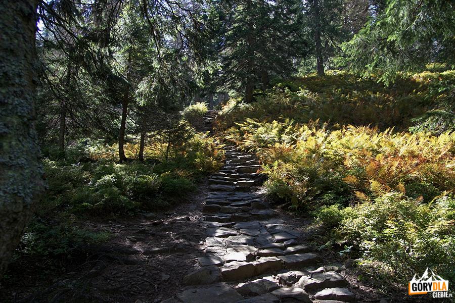 Jesienny szlak naBabią Górę
