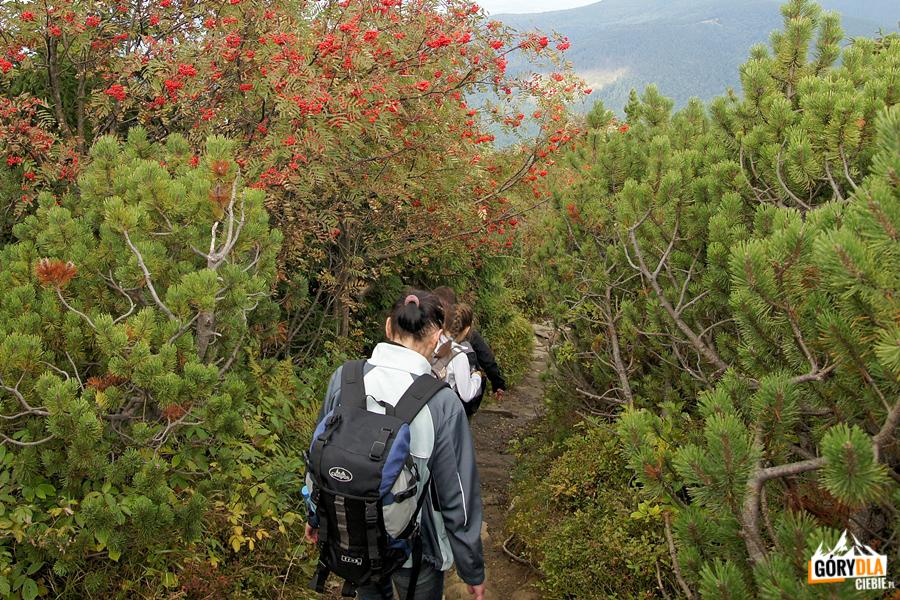 Zejście zeszczytu Babiej Góry naPrzełęcz Krowiarki