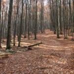 Żółty szlak na Bukowe Berdo, przy ścieżce znajdują się drewniane ławki