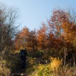 Wyjście z lasu, czeka nas teraz ostre podejście przez Połoninę Dźwiniacką