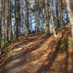 Trasa czerwonego szlaku z Szerokiego Wierchu do Ustrzyk Górnych