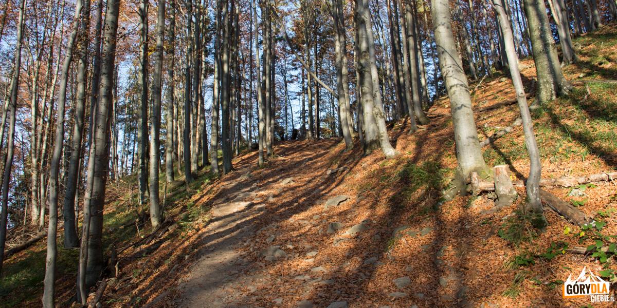 Trasa czerwonego szlaku zSzerokiego Wierchu doUstrzyk Górnych