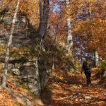 Wychodnia skalna zbudowaną z piaskowca krośnieńskiegodużą wychodnię skalną, zbudowaną z piaskowca krośnieńskiego przy czerwonym szlaku na Dwernik Kamień, powyżej niej znajduje się II przystanek ścieżki przyrodniczej