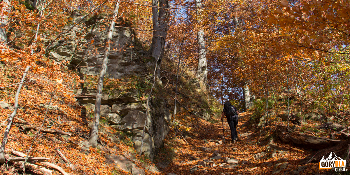 Wychodnia skalna zbudowaną zpiaskowca krośnieńskiegodużą wychodnię skalną, zbudowaną zpiaskowca krośnieńskiego przy czerwonym szlaku naDwernik Kamień, powyżej niej znajduje się II przystanek ścieżki przyrodniczej