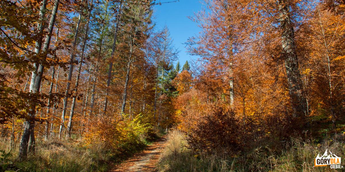 Jesienna droga na Dwernik Kamień