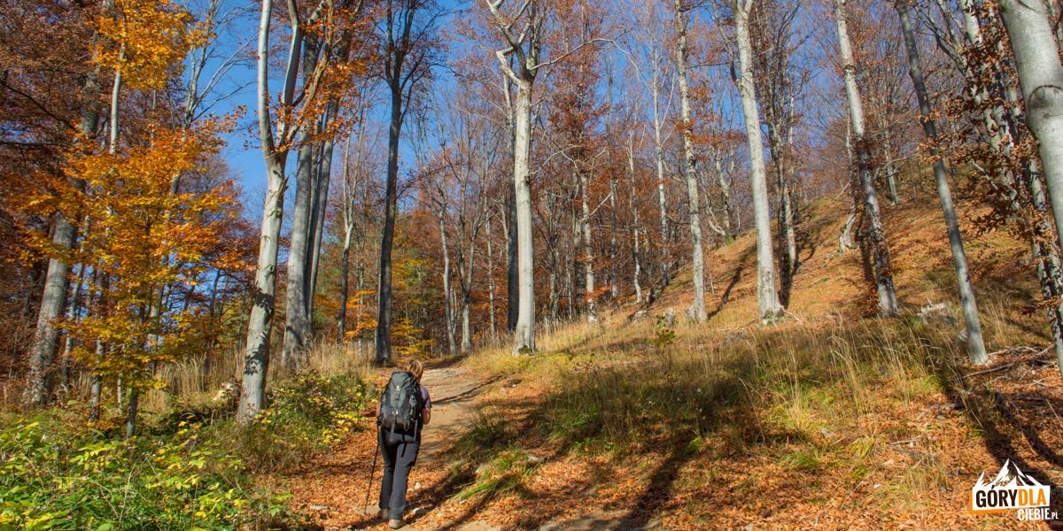Jesienny bieszczadzki las (czerwony szlak na Dwernik Kamień)