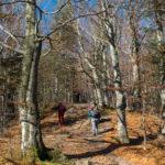 Przejście przez bukowy las na Dwernik Kamień
