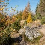 Wychodnie skalne na Dwerniku Kamieniu