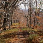 Zejście ze szczytu Dwernika Kamienia ścieżką dydaktyczną (zielone znaki) do Nasicznego