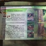 Tablice informacyjne (Nadleśnictwa Lutowiska) przy ścieżce do Nasicznego