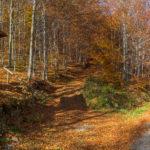 Czerwony szlak na Dwernik Kamień, przecina go stokówka z Zatwarnicy do Nasicznego