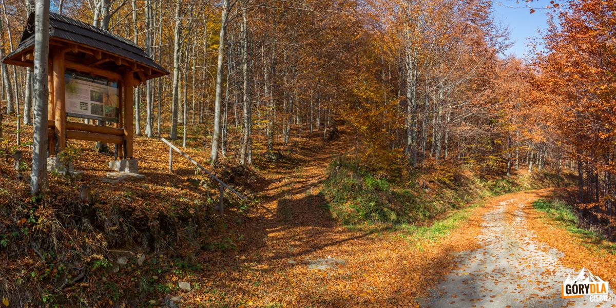 Czerwony szlak naDwernik Kamień, przecina go stokówka zZatwarnicy doNasicznego