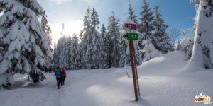 Skrzyżowanie szlaków na Bukowinie Obidowskiej
