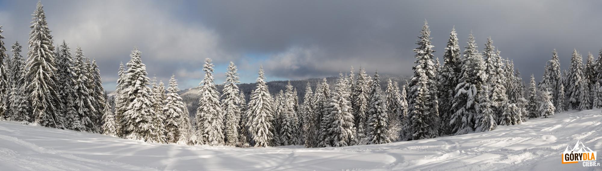 Zima pod Turbaczem