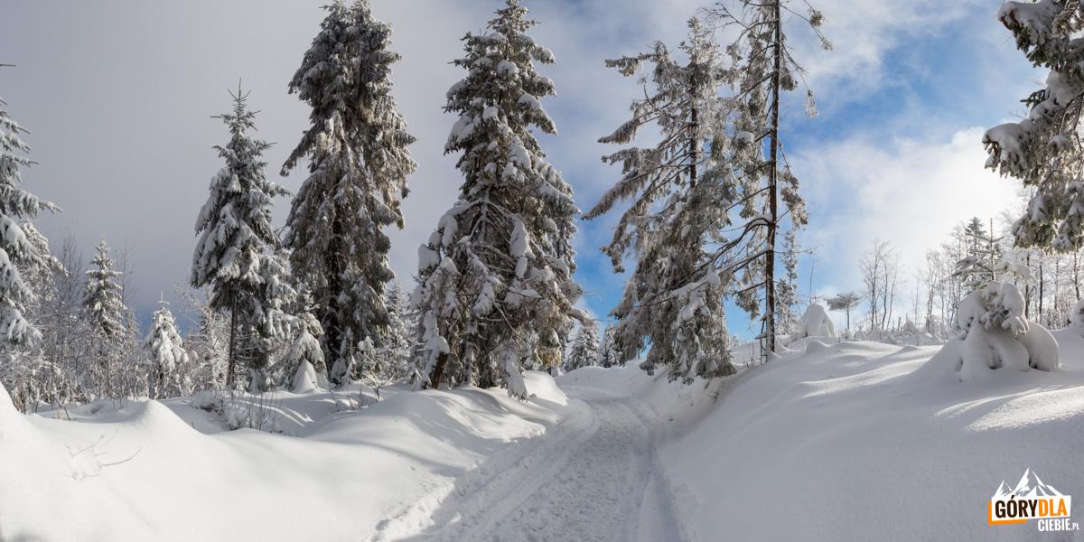 Panorama z trasy czarnego szlaku na Turbacz