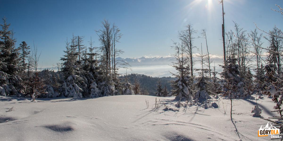 Widok na Tatry z grani pod Turbaczem (żółty szlak)