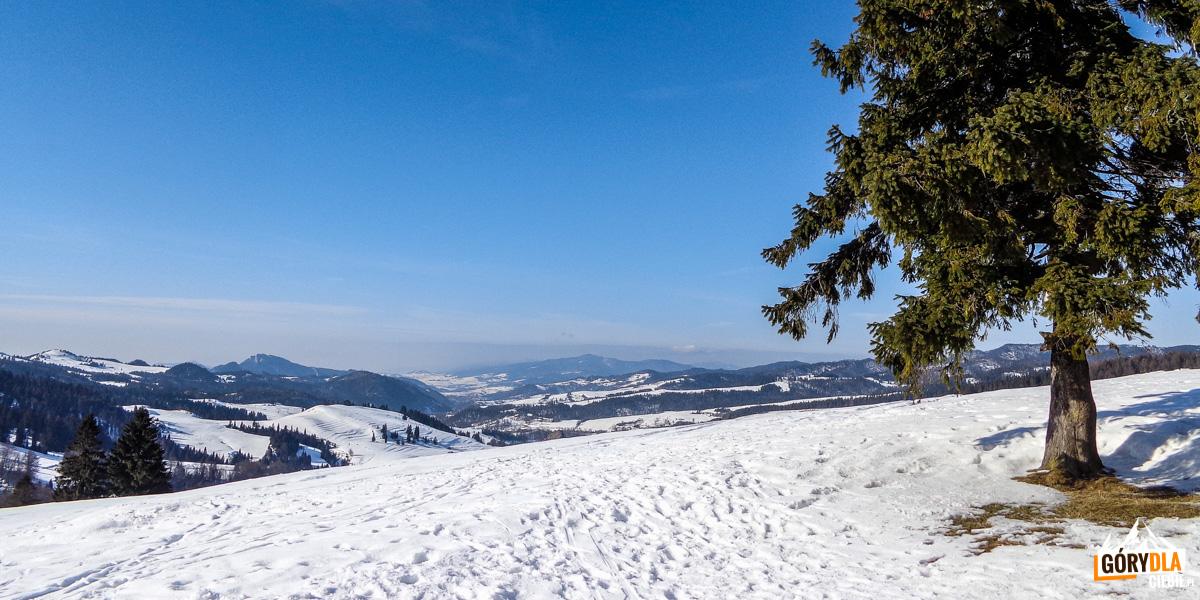 Widok spod Przełęczy Rozdziela na Trzy Korony i Gorce