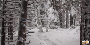 Droga przez las na szczyt Kukuł (1534 m)