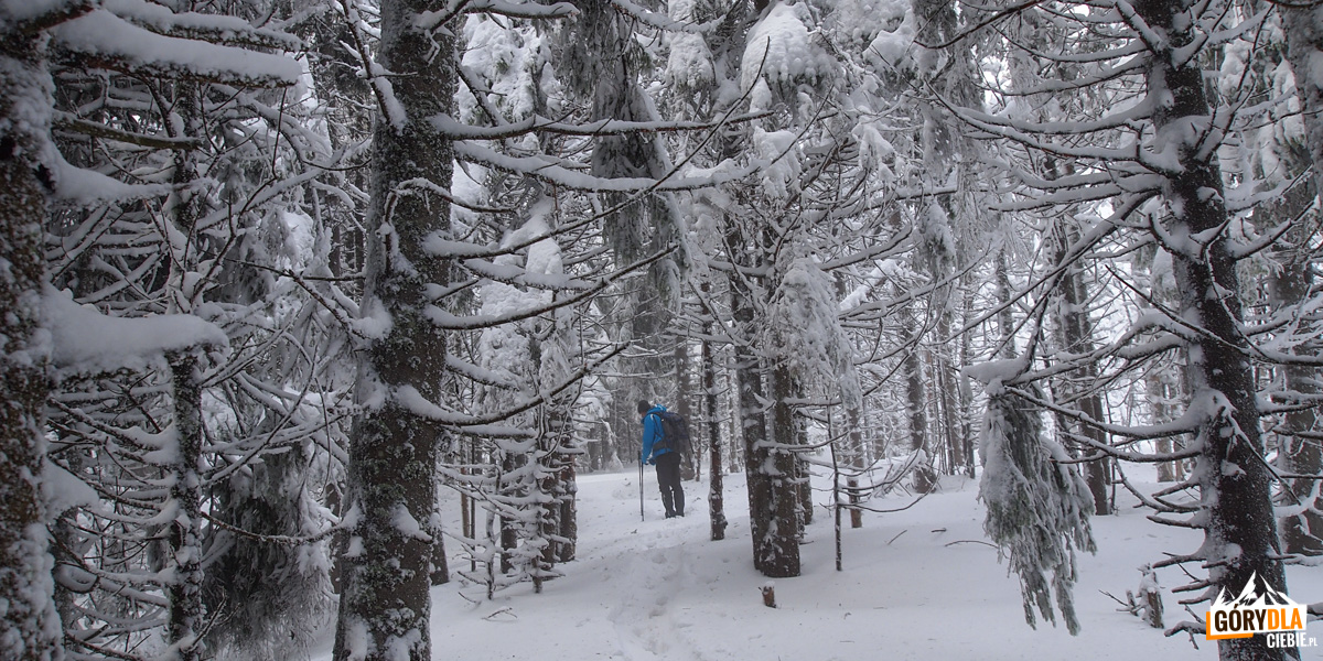 Droga przez las naszczyt Kukuł (1534 m)